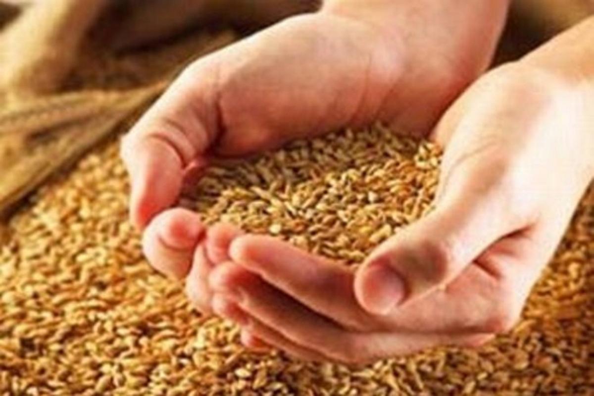 Экспорт зерна из Украины обновил исторический максимум