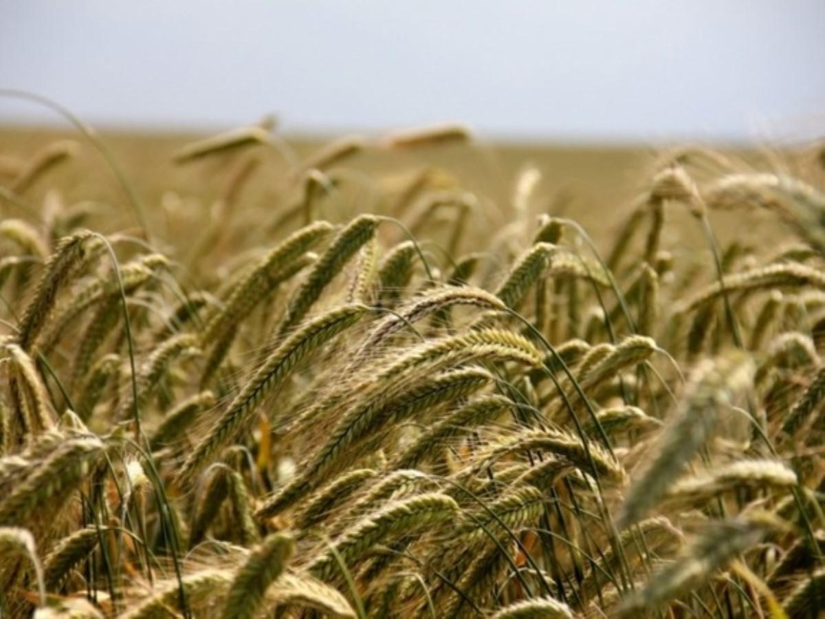 Украина экспортировала 18 тыс. тонн меда