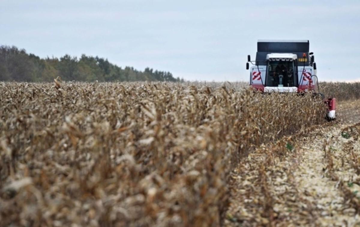КНР отказывается отукраинского зерна из-за жуков ивирусов