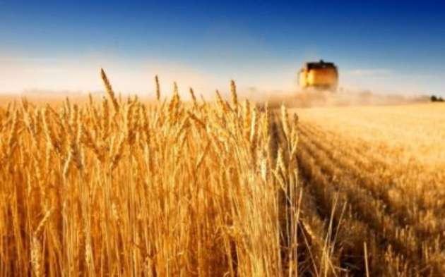 ВУкраинском государстве  собран рекордный урожай ячменя