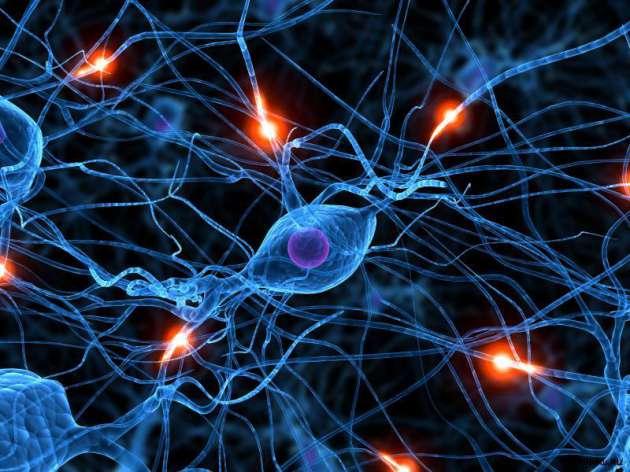 Финские ученые отыскали способ улучшить работу мозга