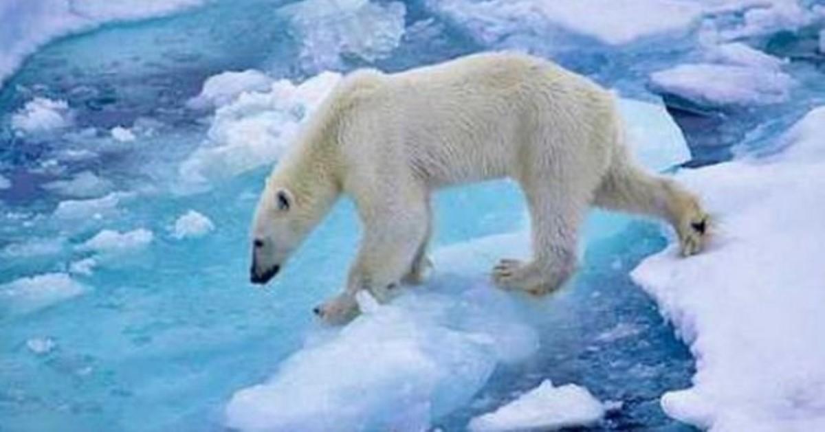ВNASA разработали карту затоплений из-за таяния ледников