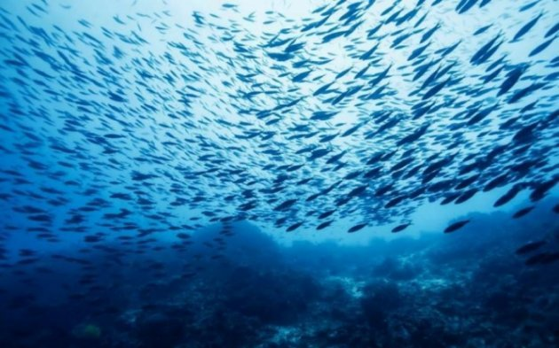 В Марианской впадине нашли новый вид глубоководной рыбы. Видео