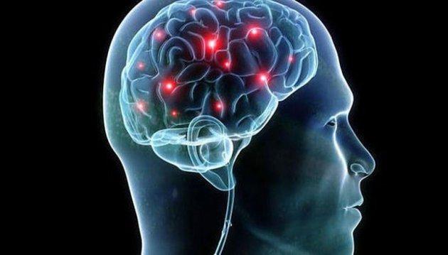Биологи впервый раз увидели, как появляются новые клетки мозга