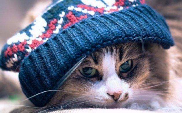 Холодно иветрено: какими станут последние выходные февраля вСимферополе