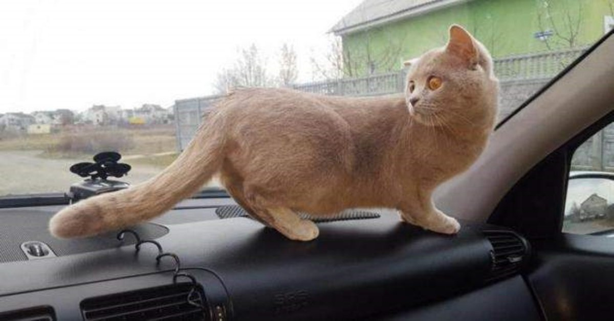 Кошка повредила «Мерседес» на1,5 млн руб.