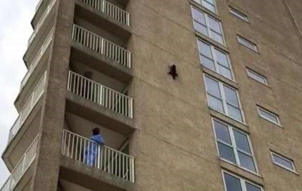 Енот-экстремал выжил после падения свысоты сдевятого этажа