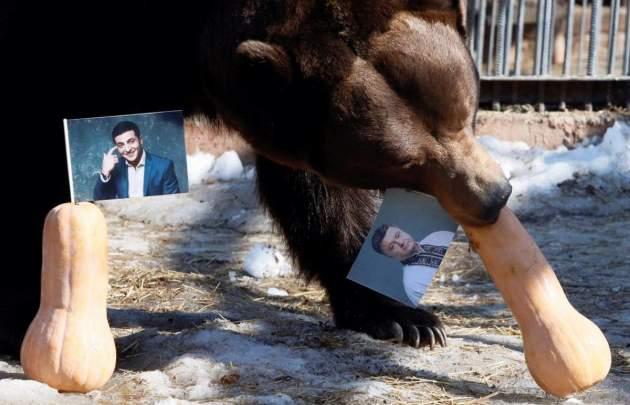 Взоопарке прошли выборы президента государства Украины  - голосовали медведи