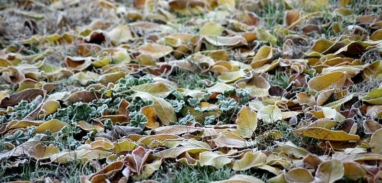 Температура существенно понизится: синоптики назвали дату прихода заморозков