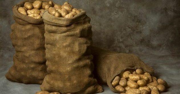 На Волыни у картошки обнаружили рак: нельзя есть даже животным